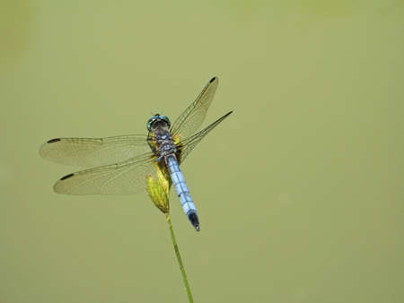 A super close-up of a dragonfly resting on a plant near a pond. photo