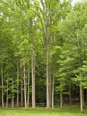 tress: A group of tress at the entrance to a forest. Stock Photo