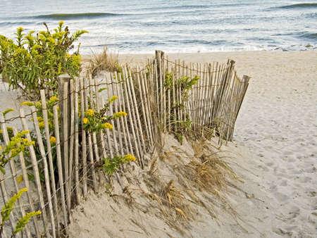 Een hek, zandduinen en guldenroede langs de New Jersey wal.