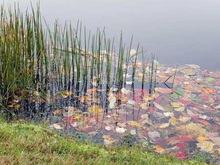 Some pond weeds and fall leaves along a small pond. Stock Photo - 585631