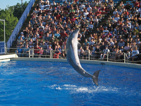 crowd tail: A dolphin jumps at a dolphin show at Great Adventure in New Jersey. Stock Photo