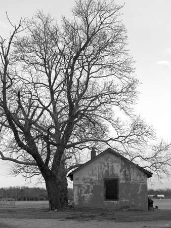 A black and white composition of an old shack and tree. photo
