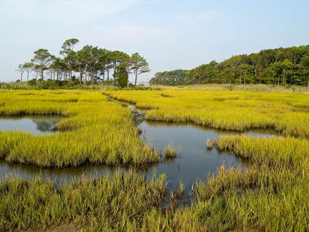 A wide view of a estuary along the Maryland coast near Ocean City.