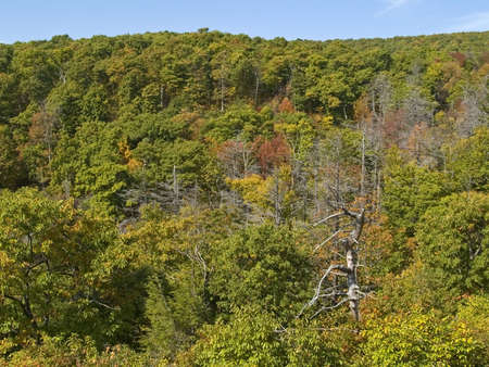 A tapestry of trees against a blue sky in early Autumn in Shenandoah National Park in West Virginia. photo