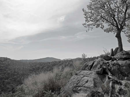 A black and white photograph of a lone tree on a rocky cliff overlooks Shenandoah National Park along Skyline Drive. photo