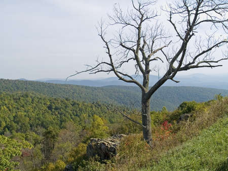 A shapely dead tree frames the scenic view along Skyline Drive at Shenandoah National Park in West Virginia. Stock Photo - 2064179