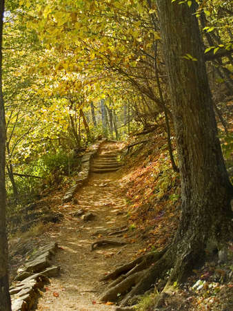 A tunnel of Fall colors frame this hiking trail in Shenandoah National Park in West Virginia. photo