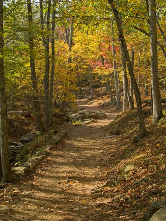 A colorful hiking trail in the woods of Shenandoah National Park, West Virginia. photo