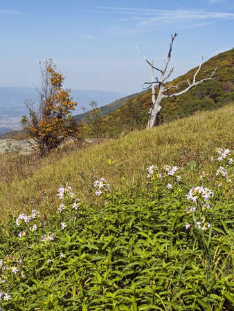 Wildflowers and a bare tree frame this beautiful mountain scene in Shenandoah National Park in West Virginia. photo