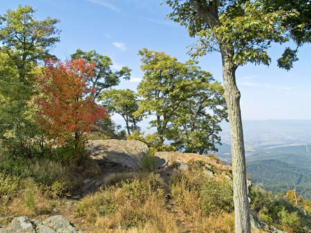 west virginia trees: A group of trees atop a mountain in early Autumn, Shenandoah National Park, West Virginia.
