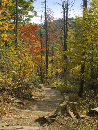 west virginia trees: colorful hiking trail in the woods of Shenandoah National Park, West Virginia.