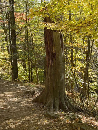 An old stump along an Autumn hiking trail at Shenandoah National Park in West Virginia. photo