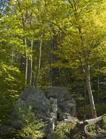 west virginia trees: Tall trees and rock formations are part of the beauty of Shenandoah National Park in West Virginia.