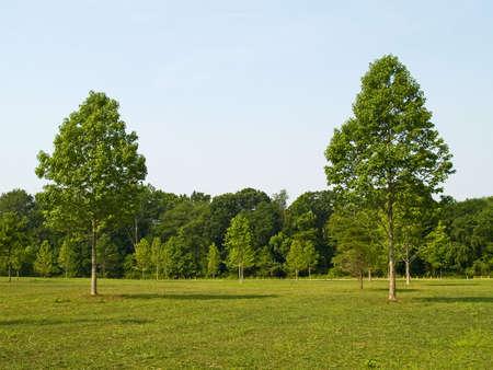 Zwei Bäume in einem Feld auf einem schönen Sommertag in einem Park in Manalapan, New Jersey, USA.