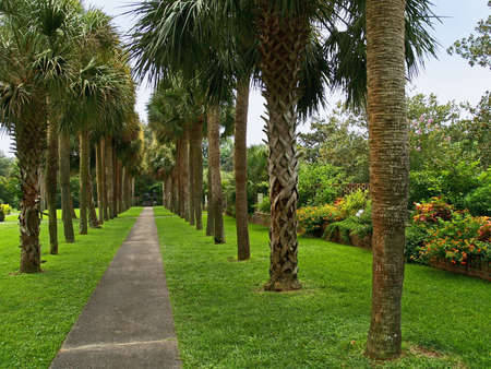A row of palm trees at the scenic Brookgreen Gardens near Myrtle Beach in South Carolina.