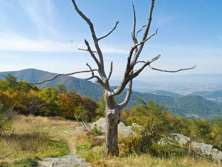 west virginia trees: A bare tree frames this landscape in Shenandoah National Park in West Virginia. Stock Photo