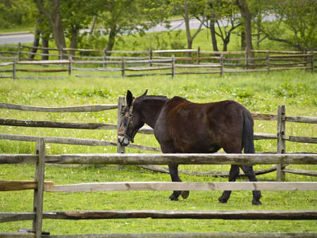 corral: A horse in a corral on a farm in Central New Jersey. Stock Photo