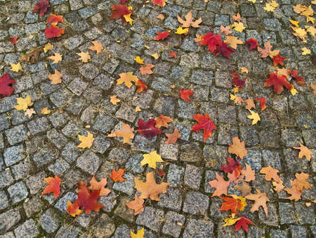 Autumn leaves on cobblestones create an interesting pattern.