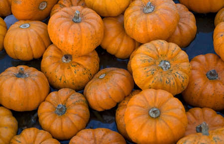 A background shot of small pumpkins. photo