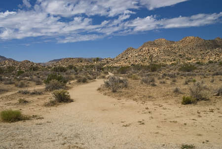 A landscape of the Mohave Desert and Joshua Tree National Park in California.