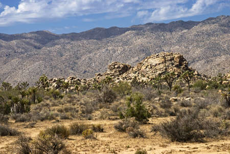 Interesting rock formations and the Joshua tree are part of the interesting landscapes in Joshua Tree National Park in Southern California. Фото со стока