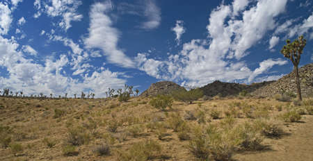 A panoramic view of Joshua Tree National Park, part of the Mojave Desert in Southern California.