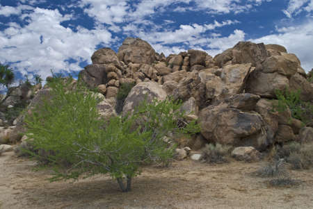 A desert landscape, part of Joshua Tree National Park in Southern California. photo