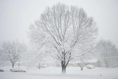 Eine Winterszene einer Nachbarschaft mit frisch gefallenen Schnee bedeckt.