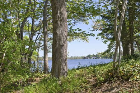 long lake: A view of the lake through the woods at The Bayard Cutting Arboretum on Long Island.