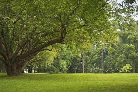 Ein Vogelschwarm startet in landschaftlich Thompson Park, Monroe Townships im Middlesex County, New Jersey.  Standard-Bild