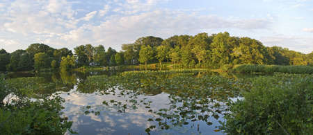 middlesex: A Panoramic view of lilly pads on Lake Manalapan in Thompson Park, Monroe Township in Middlesex County, New Jersey.