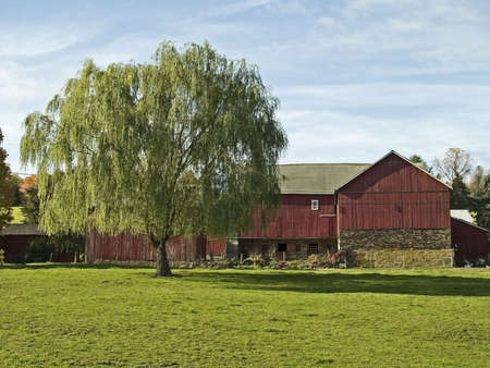 old red barn: A rural Bucks County Pennsylvania scene with a weeping willow tree and an old red barn.