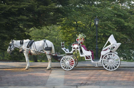 A horse and buggy in Central Park during the Summer.