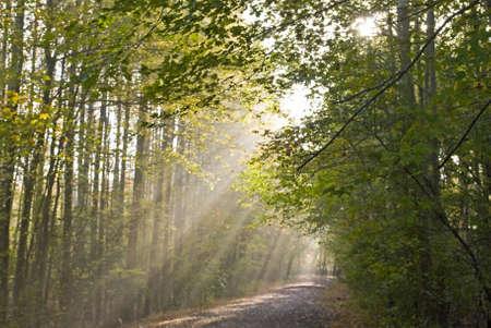 Lichtstrahlen Stream durch die Bäume auf diesem Weg in Münster Reservoir County Park in Central New Jersey. Standard-Bild