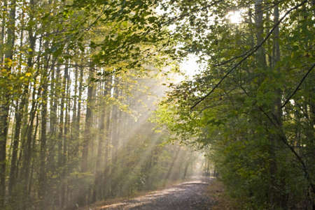 Light beams stream through the trees on this path in Manasquan Reservoir County Park in Central, New Jersey. 写真素材