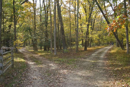 new way: This is an Autumn shot of two hiking trails at Allaire State Park in New Jersey.  Stock Photo
