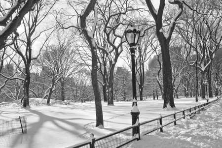 white winter: A black and white photograph of freshly fallen snow in Central Park. Stock Photo