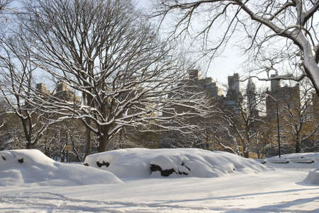 freshly fallen snow: Appena caduta neve nel Central Park di Manhattan con edifici in background.