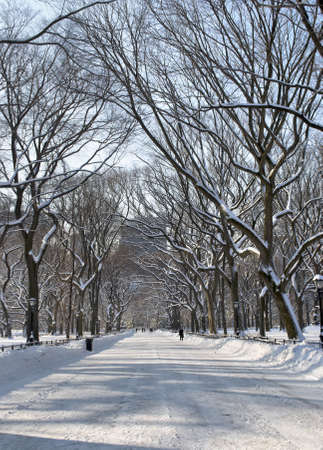 The snow covered trees in the mall area of Central Park in New York City. photo