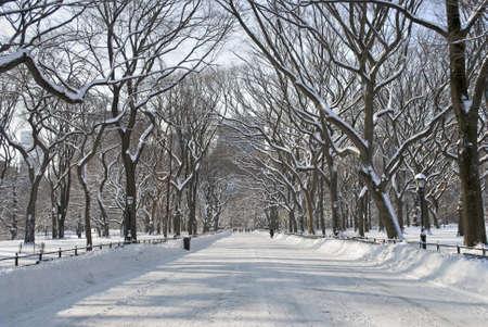Die schneebedeckte Bäume in der Mall Gegend der Central Park in New York City. Standard-Bild