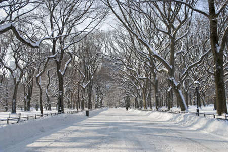 The snow covered trees in the mall area of Central Park in New York City.