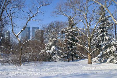 freshly fallen snow: Appena caduta neve a Central Park a Manhattan con edifici in background. Archivio Fotografico