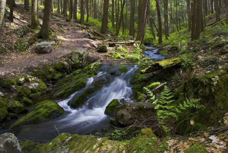A mountain stream and green woods with ferns in Stokes State Forest in New Jersey.