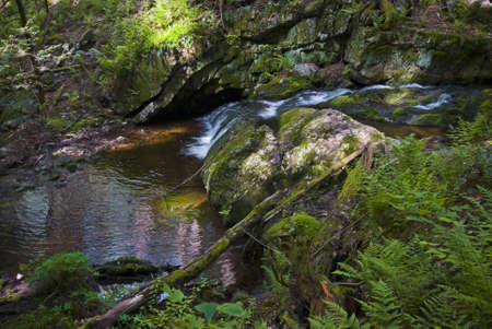 mountain stream: A mountain stream and green woods with ferns in Stokes State Forest in New Jersey.
