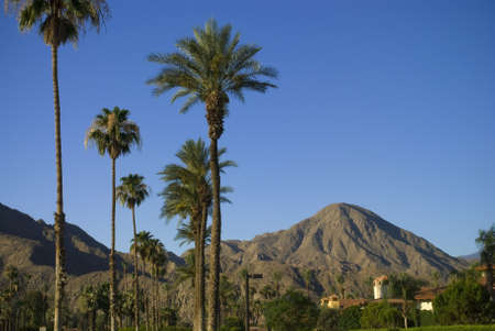 The palm trees and mountainous landscape near Palm Springs California.
