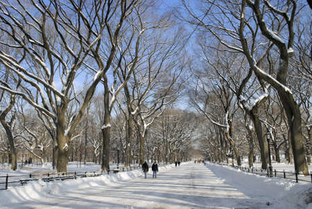 central park: The Mall in Central Park in Manhattan after a freshly fallen Winter snow.