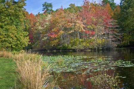 changing colors: An Autumn pond scene with lilly pads and changing colors taken in Turkey Brook Park, Monmouth County, New Jersey.