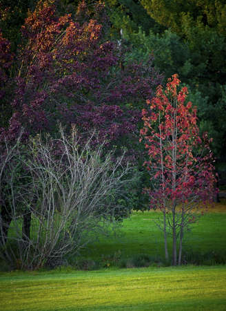 middlesex: Colorful Autumn trees at this park in Middlesex County, New Jersey.