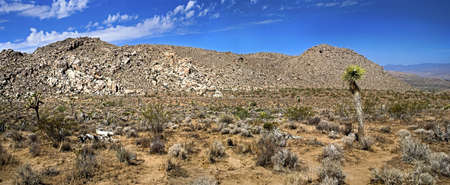 A panoramic look at Joshua Tree National Park near Palm Springs in southern California photo