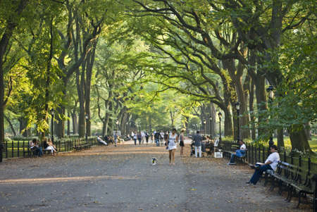 walk in the park: NEW YORK - SEPTEMBER 24: A beautiful Late Summer day on the Mall in Central Park, famous for the canopy of the American elm trees on September 24, 2010.